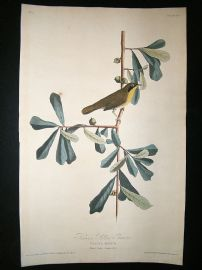 Audubon Havell: C1830 Roscoe's Yellow Throat. Folio 1st Edition. Hand Col